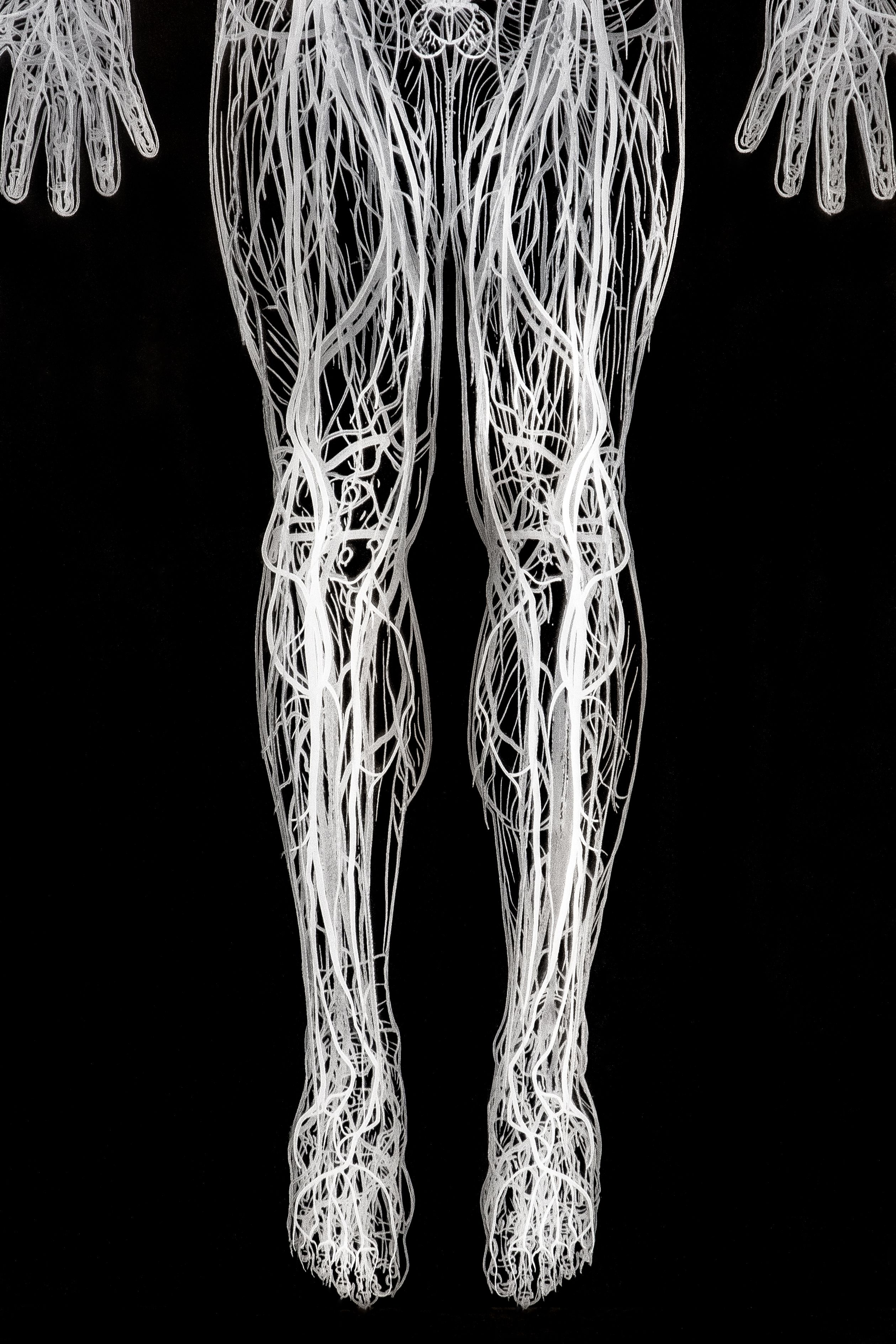 A set of 11 laser engraved movable plexiglasses illustrating the human body systems
