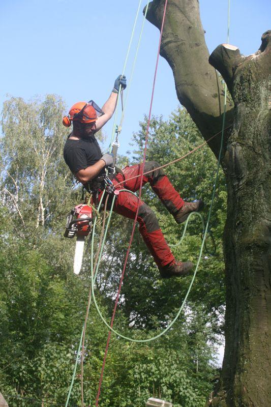 Mit Spezial-Qualifikationen in der Seil-Klettertechnik kommen wir auch ohne schwere und teure Geräte an jede Stelle Ihres Geländes. Durch unsere FLL-Zertifizierung in der Baumkontrolle unterstützen wir Sie in Ihrer Verkehrssicherungspflicht.