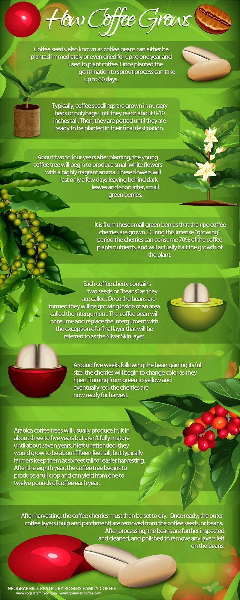 How The Finest Quality Coffee Grows Take A Look At This Infographic Growing Coffee Coffee Plant Coffee Varieties
