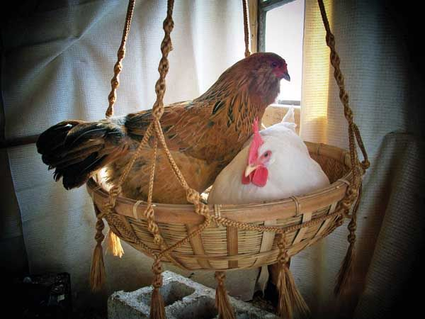in a basket!