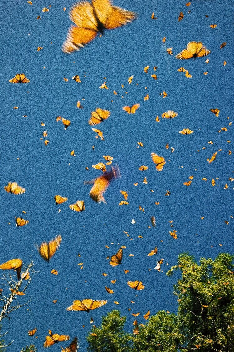 Fond D Ecran Iphone Rose Gold Esthetique Tumblr Iphone En Papillon Or Rose In 2020 Butterfly Wallpaper Iphone Aesthetic Wallpapers Aesthetic Pastel Wallpaper