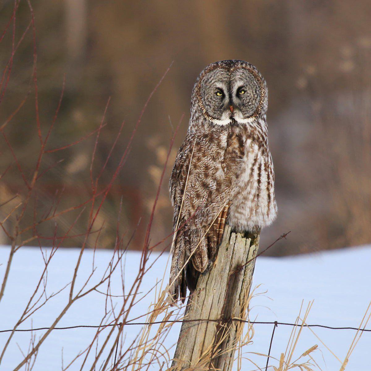 The Best 20 Ways to Attract Winter Birds   Birds, Backyard ...
