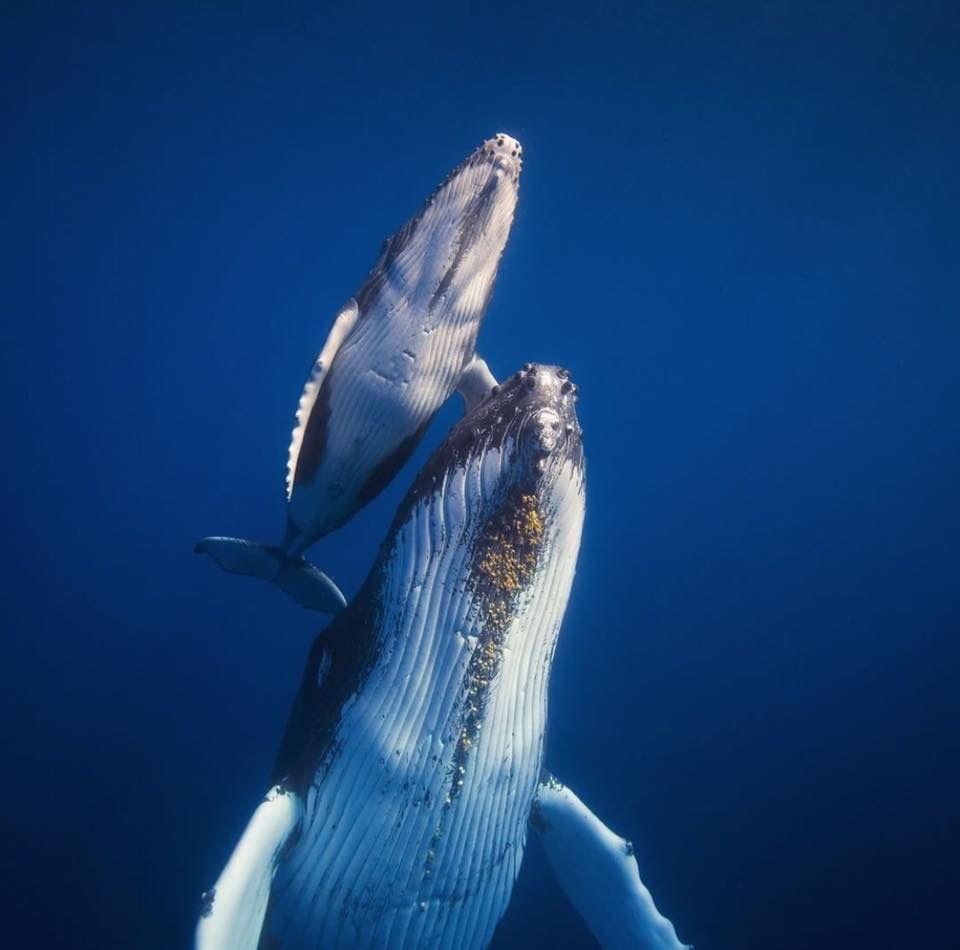 Baleines Wassertiere Wale Beobachten Ozean