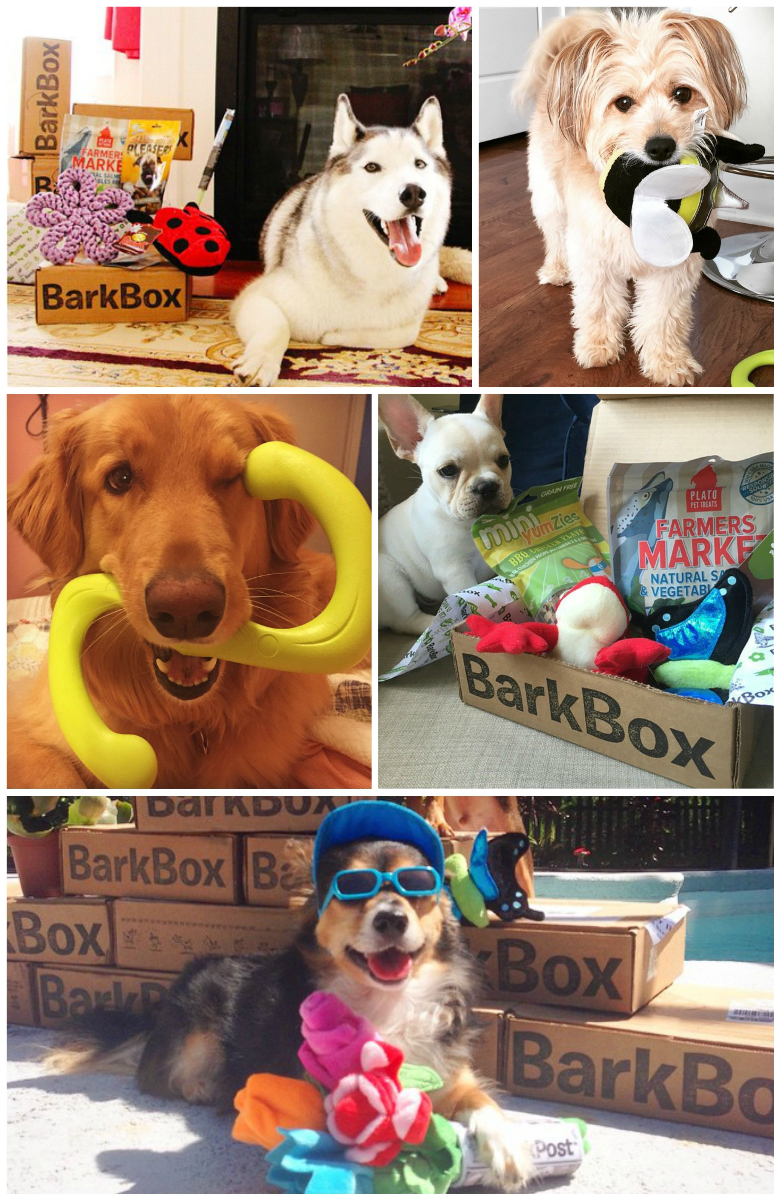 Happy pupstomers are pawtying it up with their new treats