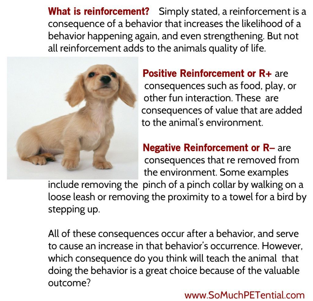 Positive Reinforcement Pet Owners And In Particular Dog Trainers