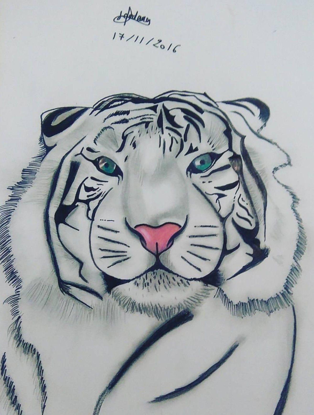 Tigre Blanc Idee Dessin Pinterest