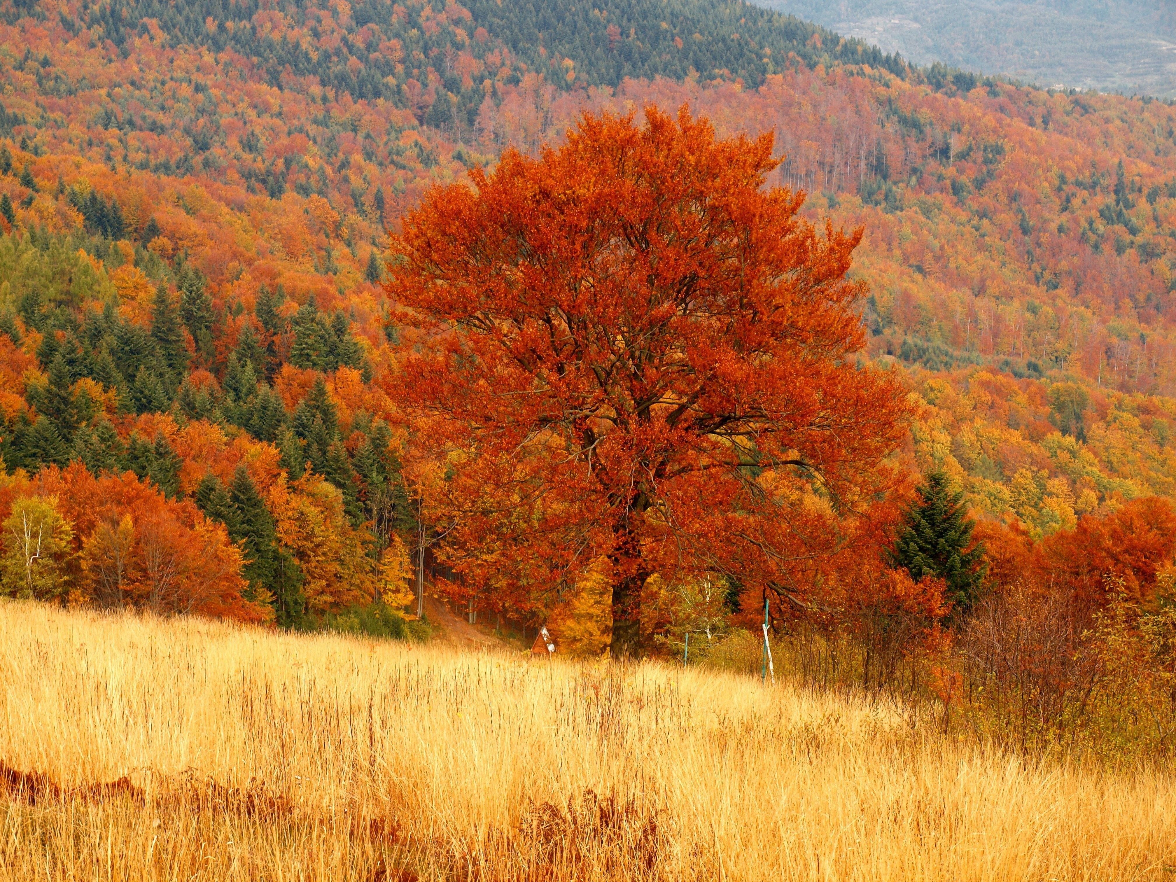 Fall Wallpapers Photography Backgrounds Autumn Landscape Life Is An Adventure Nature