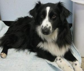 Adopt Dakota On Caballos Y Perros Perros