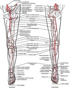 O que ajuda a dor muscular