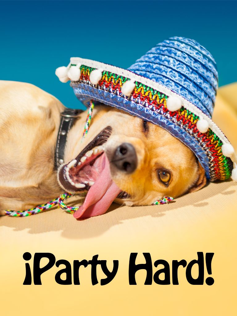 Sombrero Dog Card Birthday Cards Application Birthday