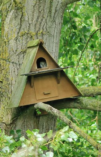 Barn owl in nesting box | birdhouse | Nesting boxes, Owl ...