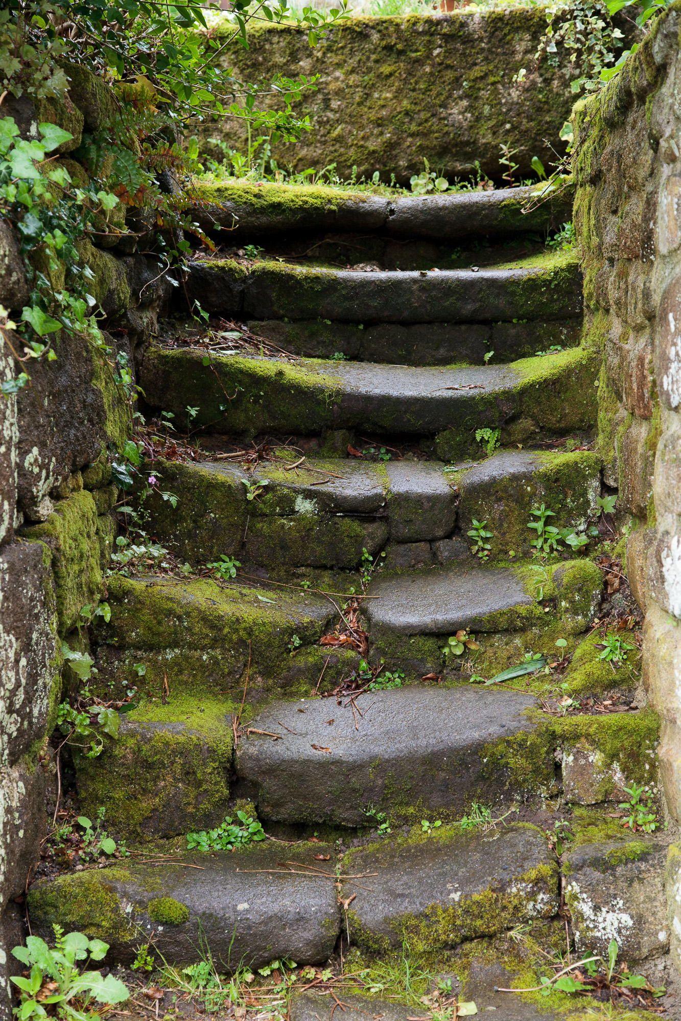Stairs by Marc Wojnarowski on 500px   Allée de jardin ...