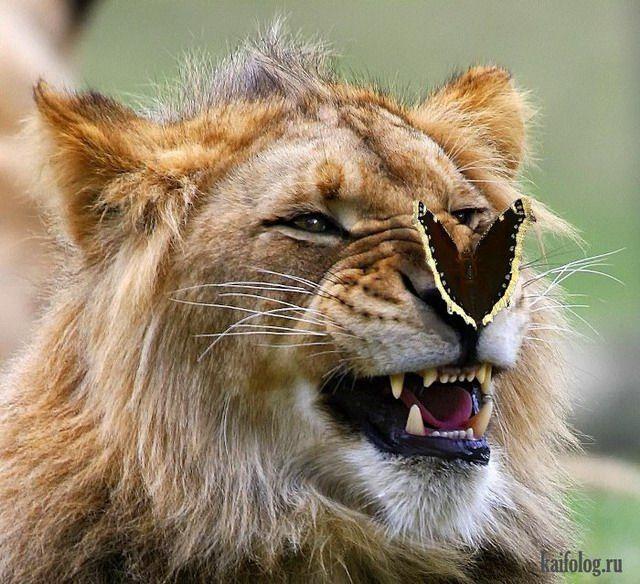 Позитивные фото зверей (55 фото) | Животные, Фотографии ...