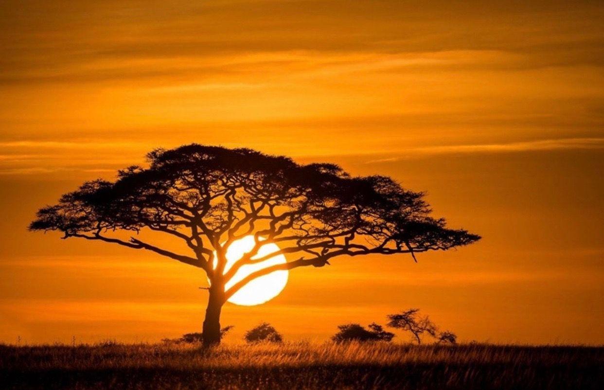 Pin Von Irene Platero Auf Arte Afrikanischer Sonnenuntergang