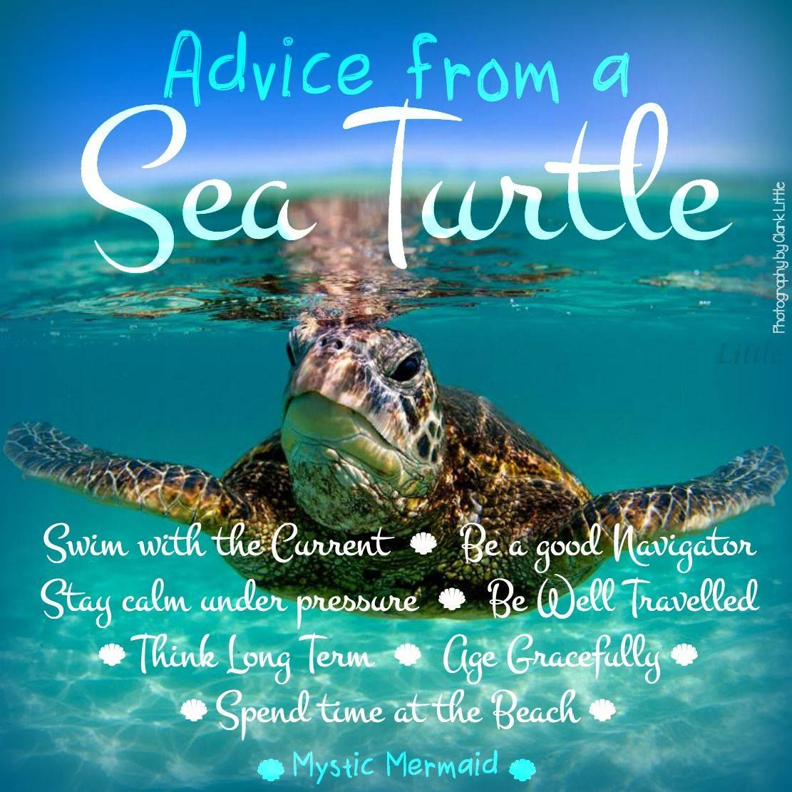 Quotes About Ocean: Advice From A Sea Turtle