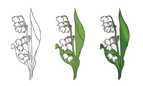 lily of the valley drawing lily of the valley