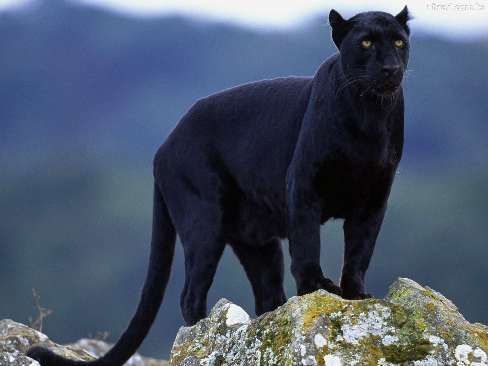 Animales - Naturaleza - Página 3 674fa065b9544a19c7b85c8b2f375ed6