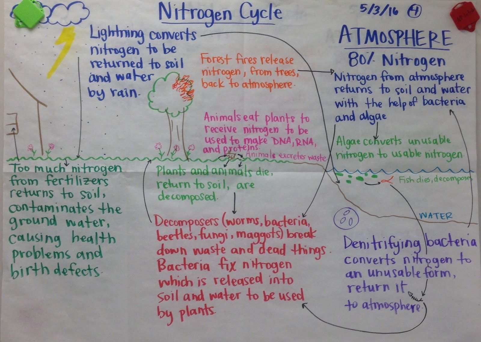 Biochemistry Final Review Sheet Properties Of Water Macromolecules Nitrogen Cycle Ecosystems