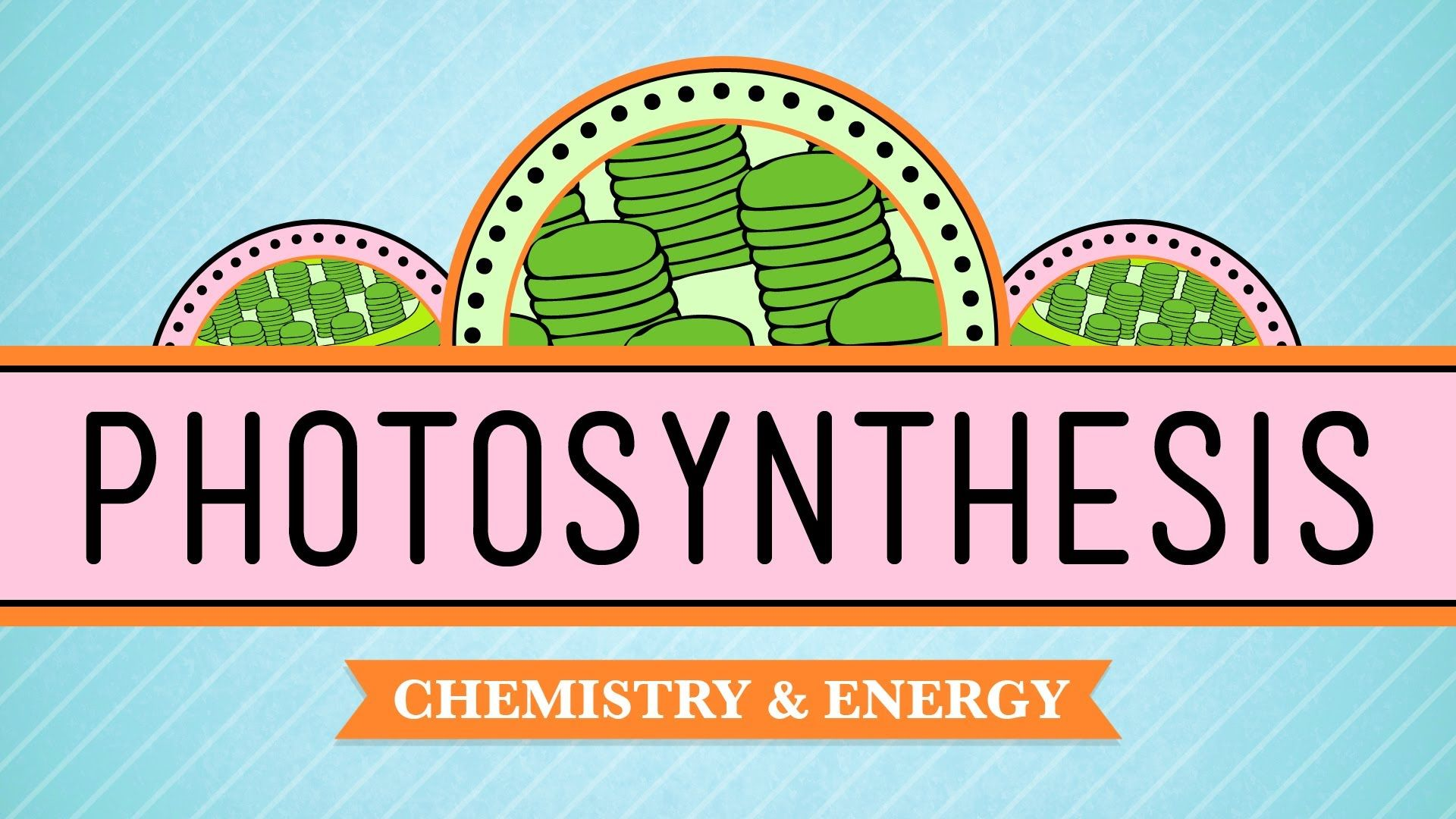 photosynthesis crash course biology 8 biology for kids
