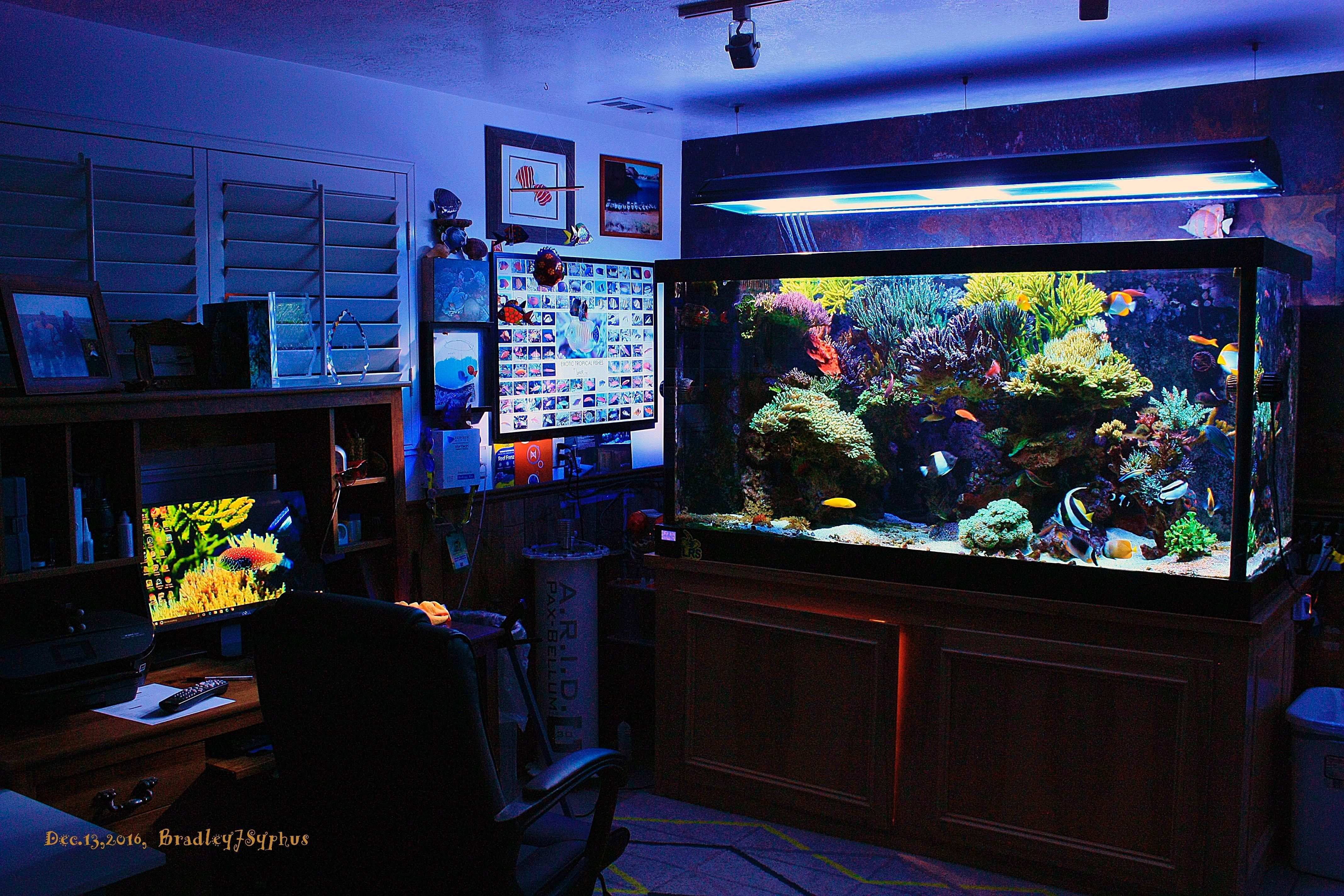 Tank Parameters Of Some Masters To This Day One Of The Most Frequently Asked Questions I Get And Actually That Man Saltwater Tank Marine Aquarium Fish Tank