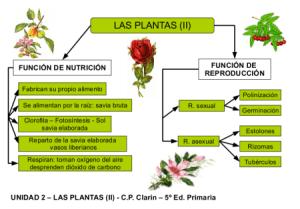 Funciones Vitales En Las Plantas Herbs Biology Education