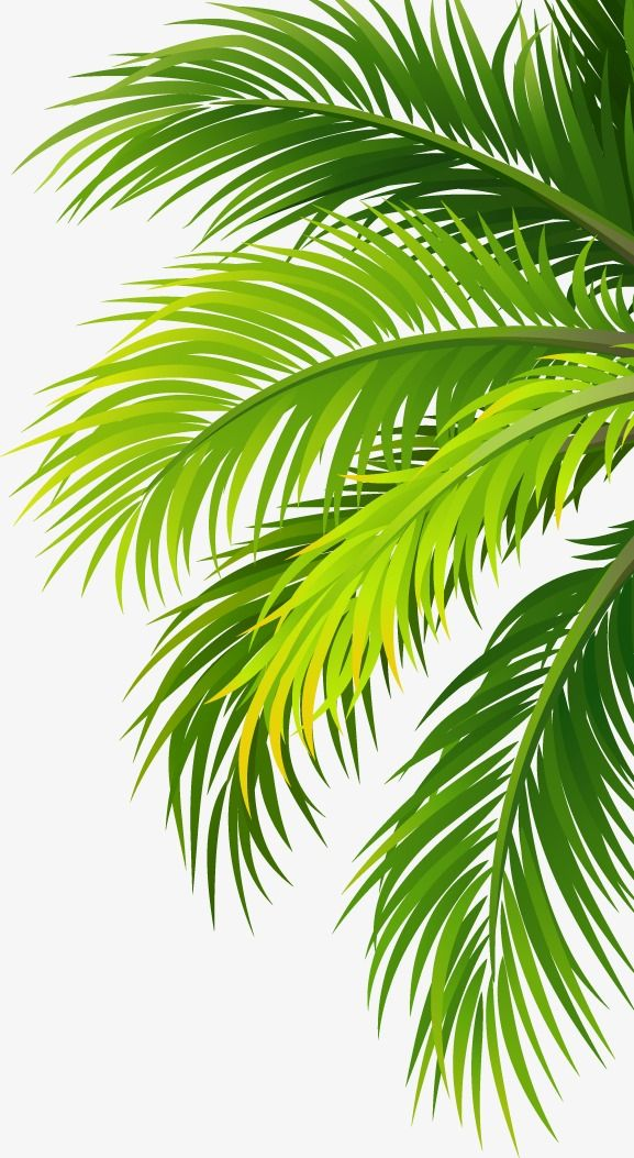 Leaves Png And Clipart Palm Trees Painting Palm Tree Sticker Plant Wallpaper
