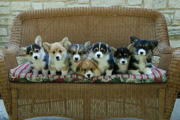 If I could wake up to bundles of joy like these I'd die