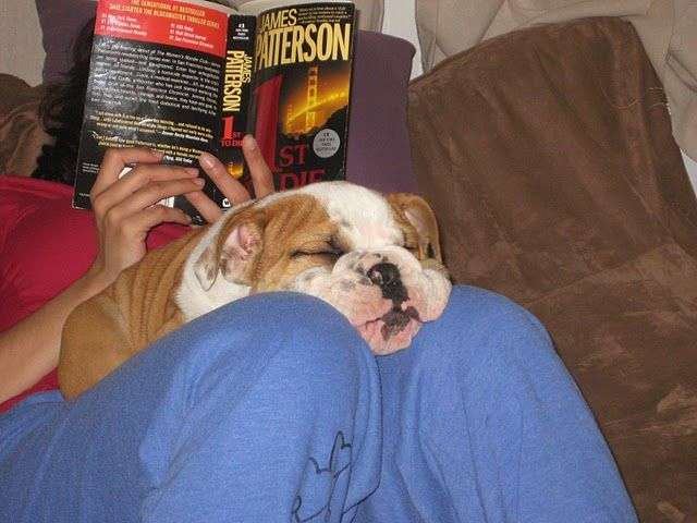 Buahwwwwwwwww Da Wittle English Bulldog Puppyyy English