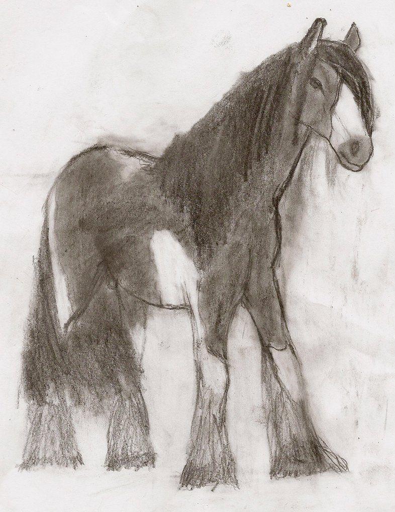 Horse Pic Horses Shire Horse Equines [ 1017 x 786 Pixel ]