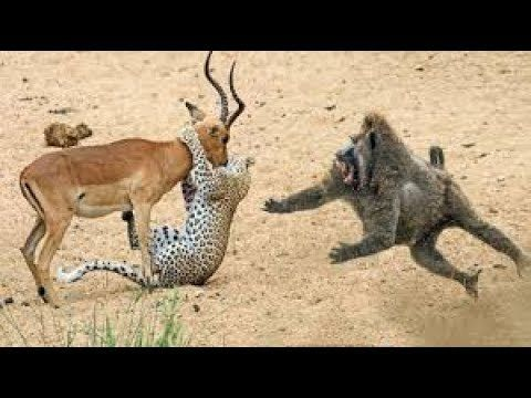 Image of: Laugh Challenge Funny Videos Wild Animals 2018 Funny Animal Videos Compilation 2018 Pinterest Funny Videos Wild Animals 2018 Funny Animal Videos Compilation