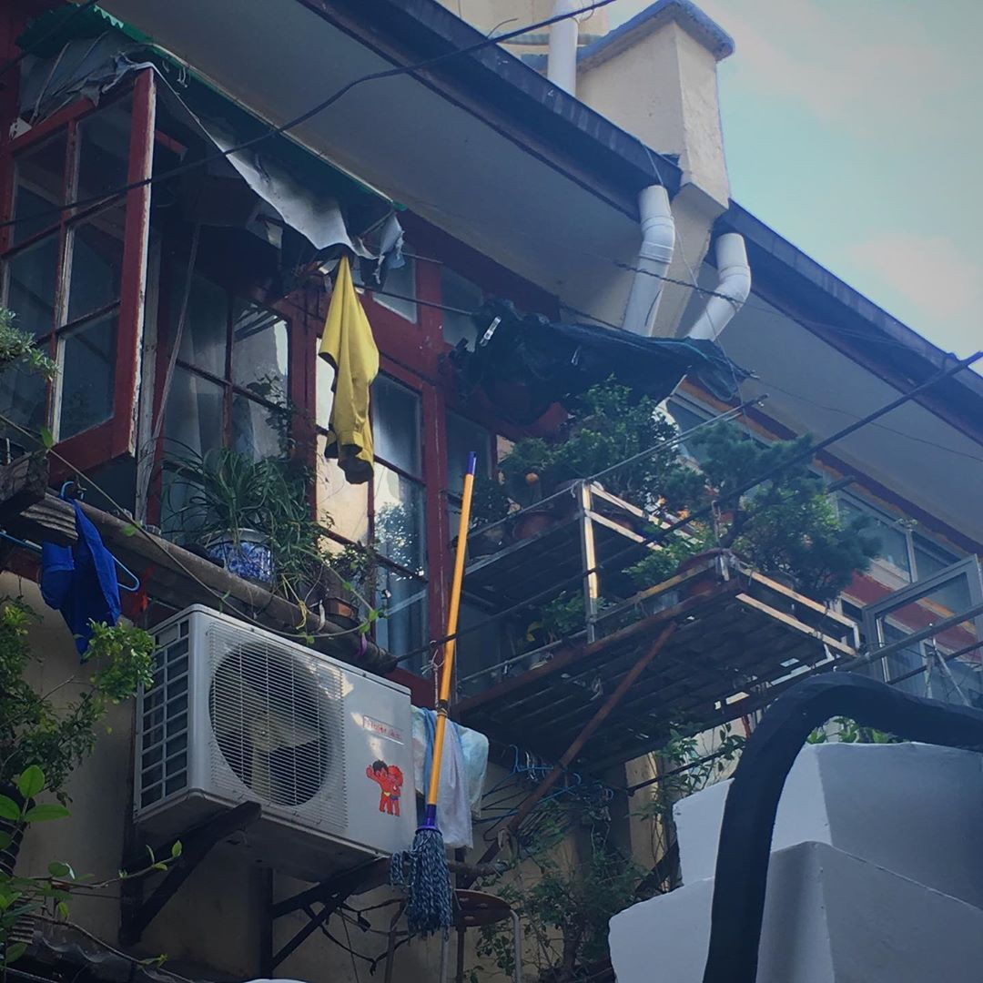近所の家 窓から飛び出るように縦に伸びる植物用の棚 写真拡大して上