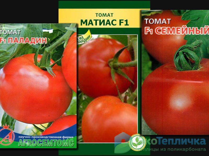 низкорослые урожайные помидоры для теплицы