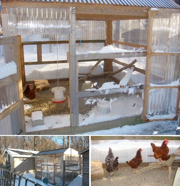 Chickens In The Winter, Chickens