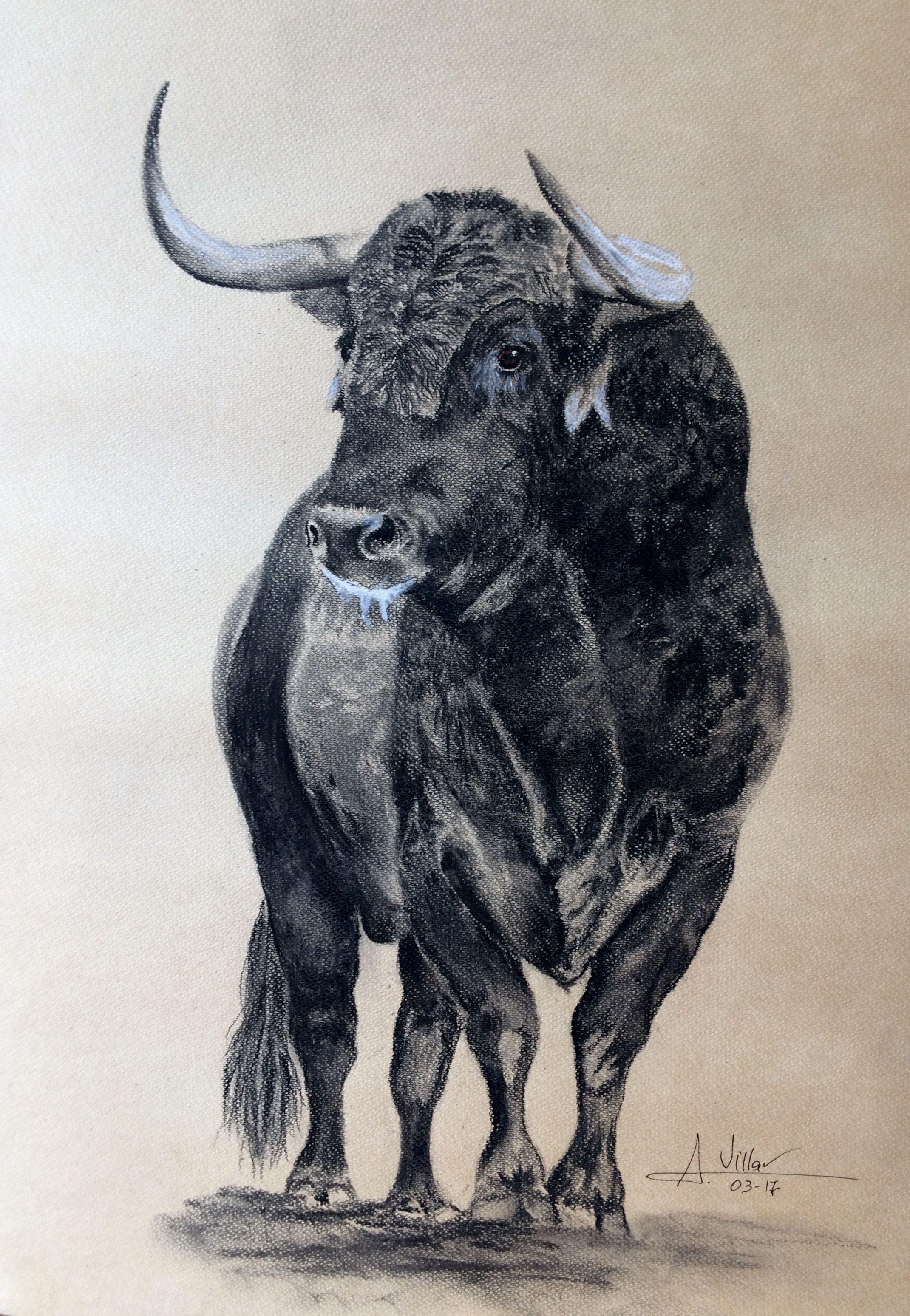 Toro Para Lidia Dibujo Realizado A Carboncillo Pinturas Toros