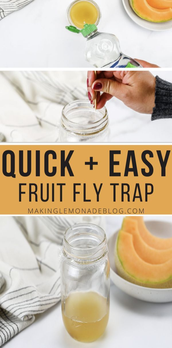 How to Get Rid of Fruit Flies (THE BEST Homemade Fruit Fly ...