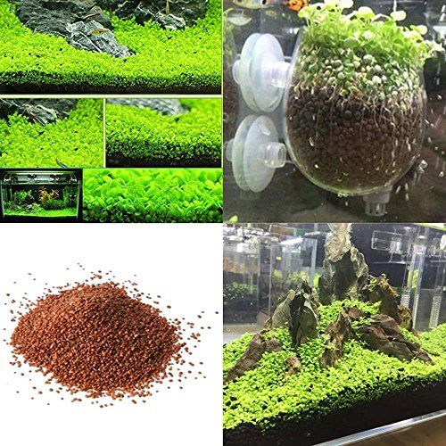 Aolvo Aquarium Plants Seeds Aquatic Double Leaf Carpet Water Grass for Home Fish Tank Rock Lawn Garden Decoration,Easy Care, Hardy and Long Lasting Plant is part of Grass lawn Water -
