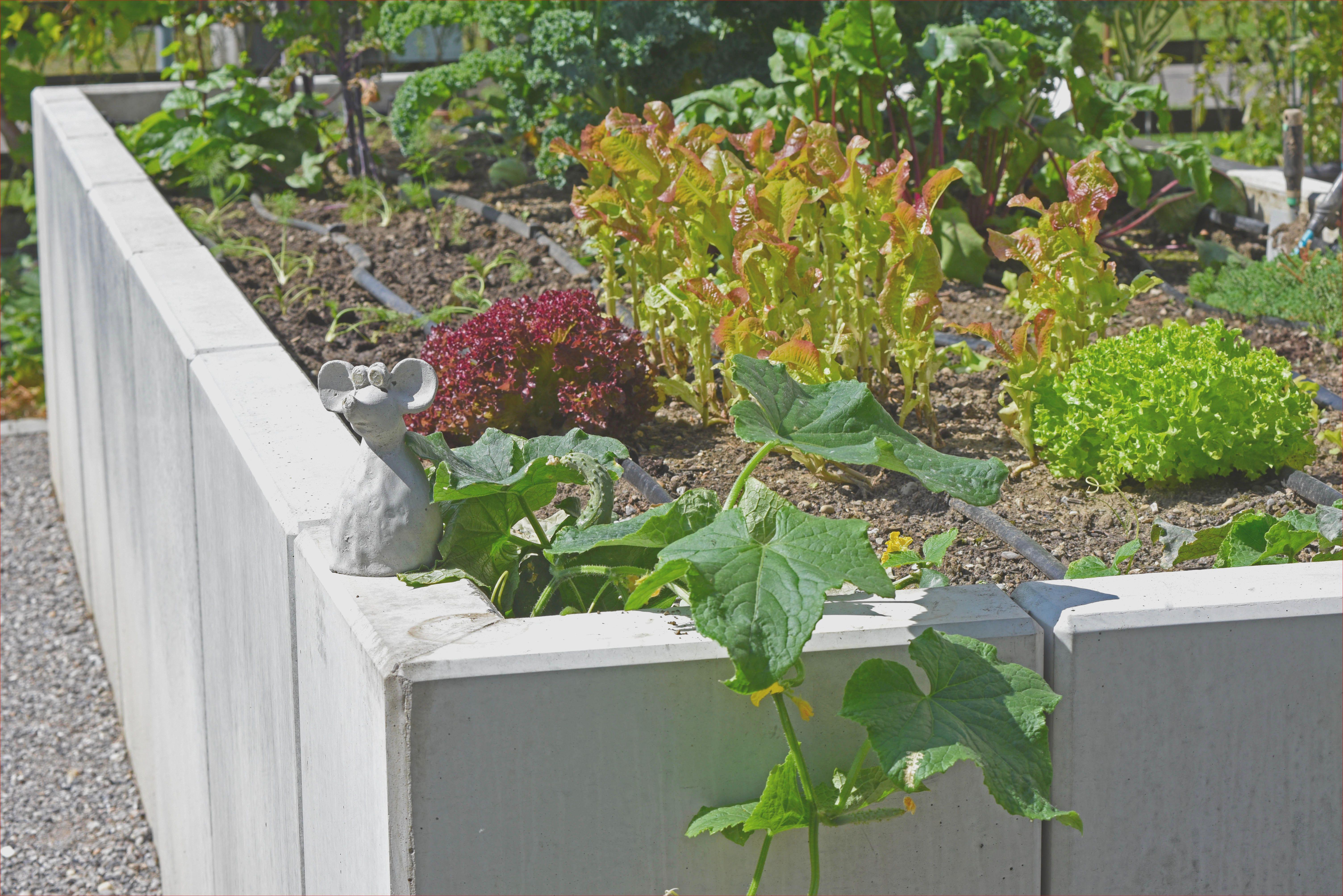 45 Das Beste Von Busche Pflanzen Sichtschutz Konzept Pflanzen