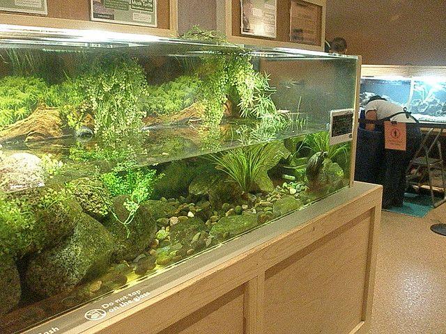 Turtle Tank Pets And Their Enclosures Turtle Aquarium