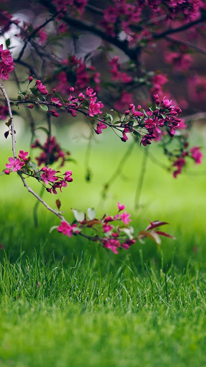 Обои цветы, grass. Цветы foto 8