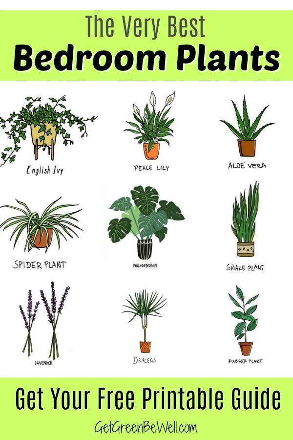 Best Bedroom Plants for Better Sleep | Best plants for ...