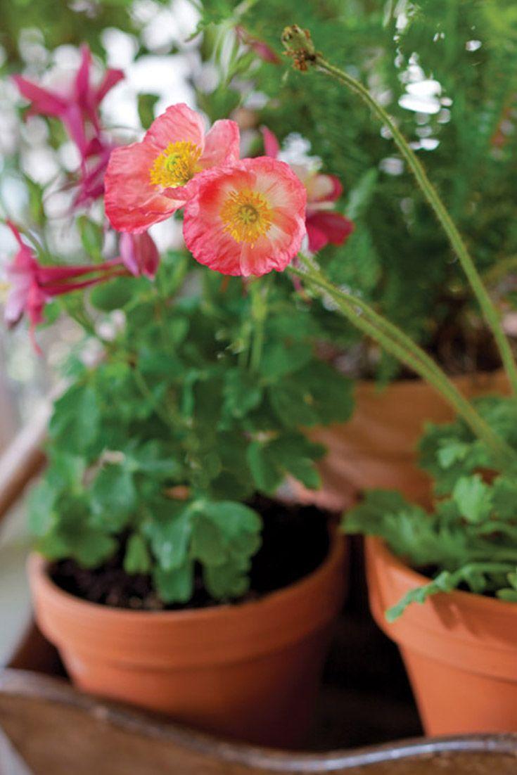 pequeas plantas en macetas hermosas flores patios porches