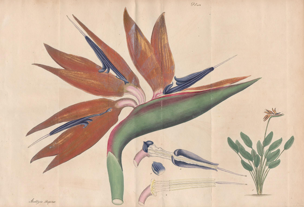 Bird of Paradise Wallpaper Tropical Design