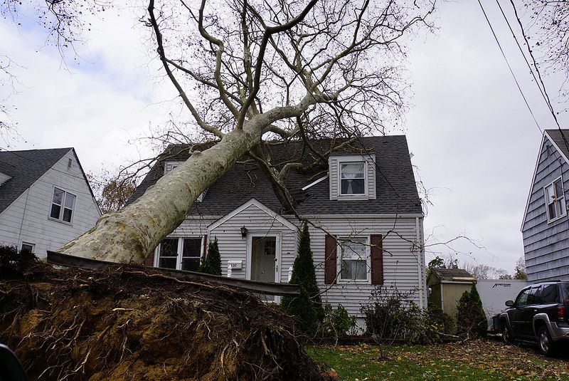 Will homeowners insurance pay for removal of fallen trees