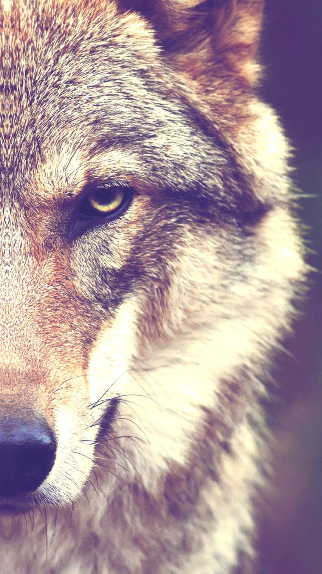 Wolf Wallpapers Background Hupages Download Iphone