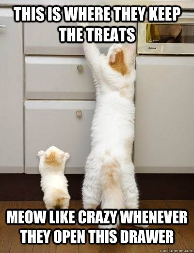 Celebrate Mother S Day With Some Of Our Favorite Mom Cat Memes Cat Memes Best Cat Memes Cat Mom