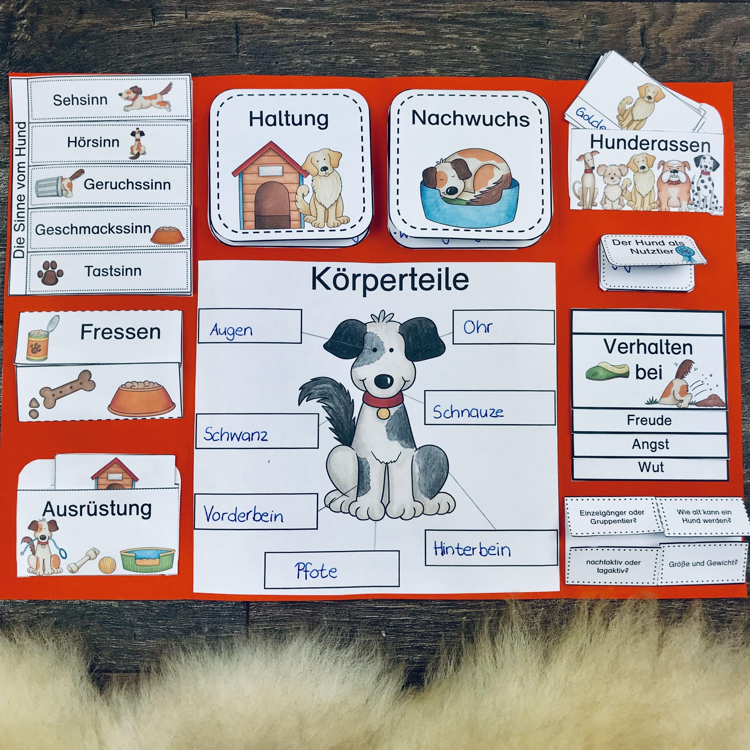 lapbook karteikarten zum hund unterrichtsmaterial im fach sachunterricht sachunterricht in. Black Bedroom Furniture Sets. Home Design Ideas
