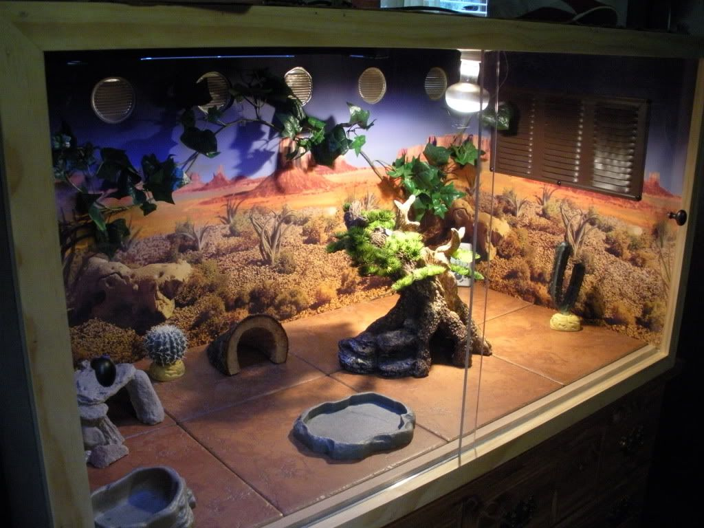 Image Result For Bearded Dragon Tank Decor Bearded Dragon Cage