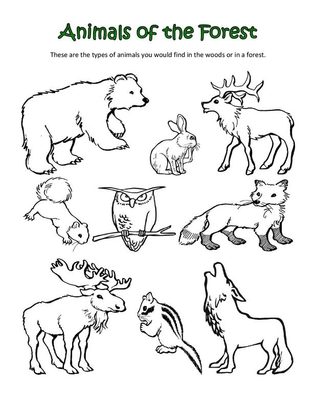 ALL SORTS Of Animal Coloring Sheets
