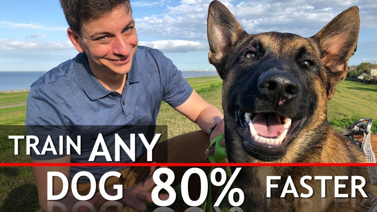 4 Things That WILL Train Any Dog 80 Faster YouTube