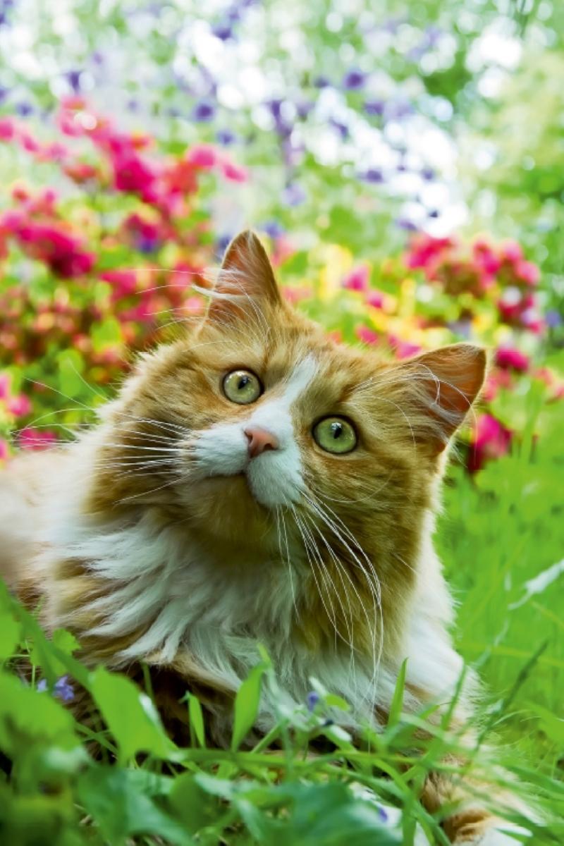 Leinwand: Katze im Garten Porträt